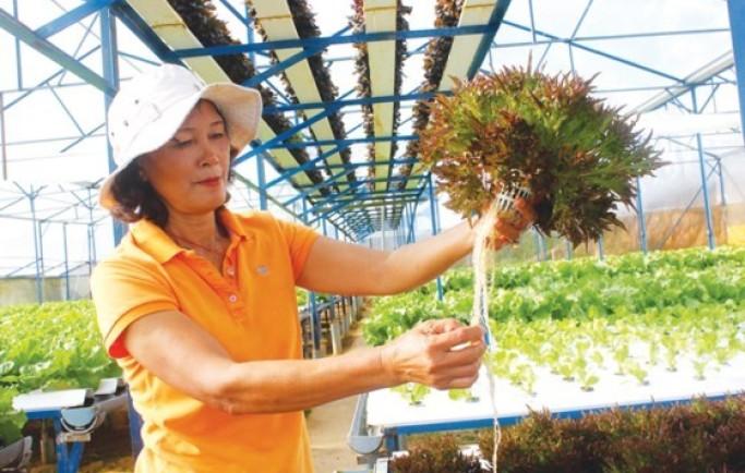 Ứng dụng công nghệ tự động cho nông nghiệp đô thị